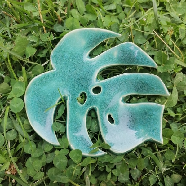 liść monstery zielony